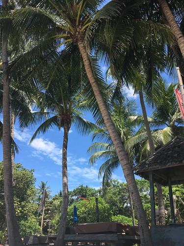 Chaweng Beach Koh Samui  コサムイ チャウエンビーチ