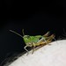 JNR_3225CNX2 Grasshopper