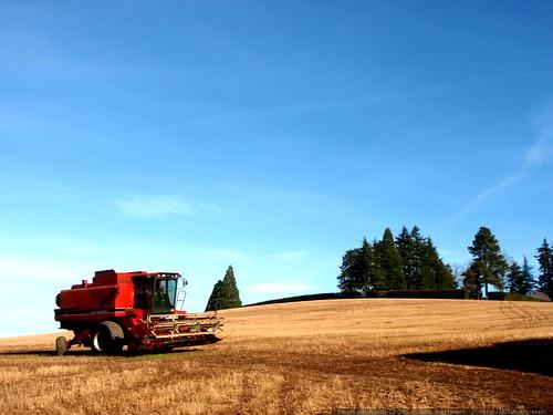combine in our neighborhood   PC240028