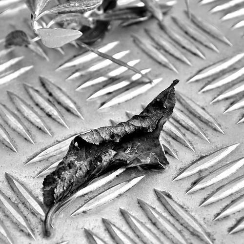 white black wet dead natural dry manmade alive d300 cmwdblackandwhite varnavasthearchitect