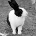 "Rabbit "" by Queen333""آذڪروآ آلله"