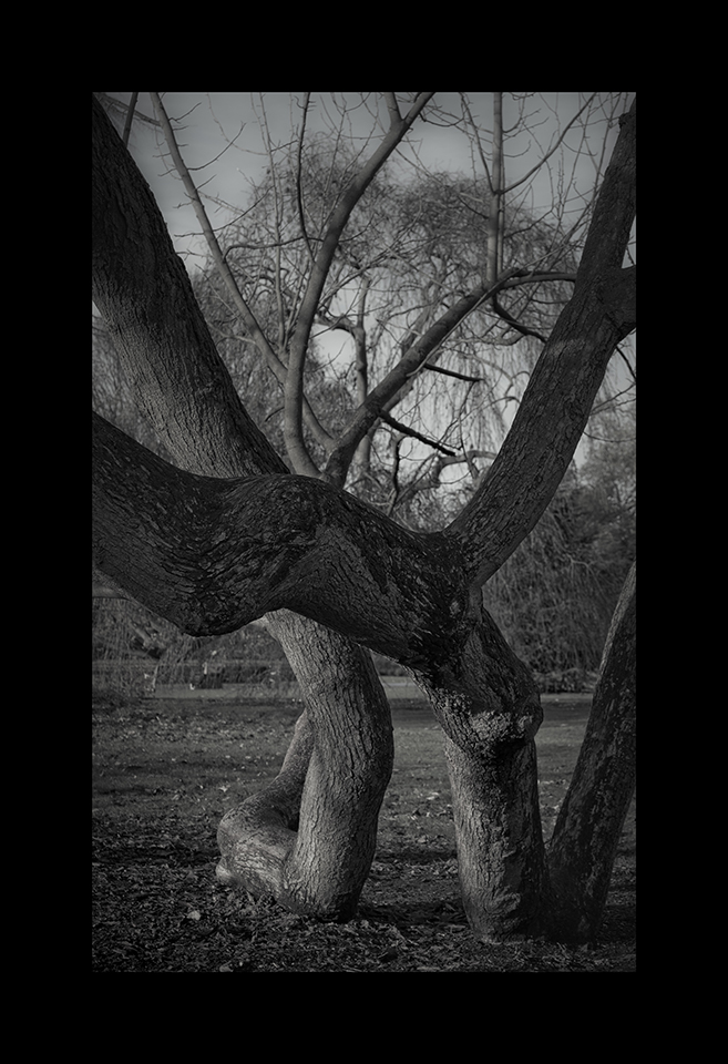 Photography: Cucumber Tree by Nicholas M Vivian