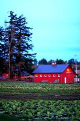 luscher farm at dusk     MG 4218