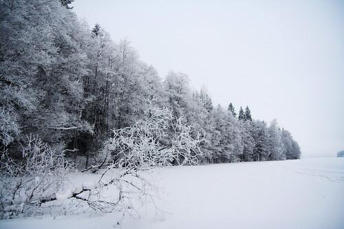 trees winter lake snow tree ice nature forest finland landscape geotagged naturephotography saari mäntsälä haukankierros cirrostratusnebulosus hunttijärvi