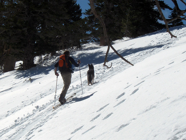 Ski touring with dog
