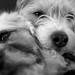 Small photo of Kalli and Tillie