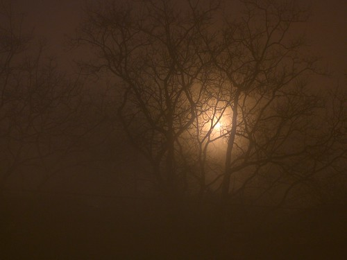 fog night