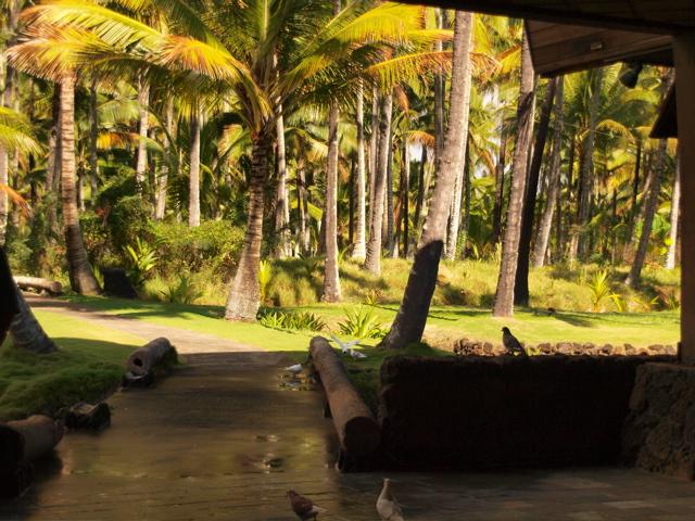 More Coco Palms