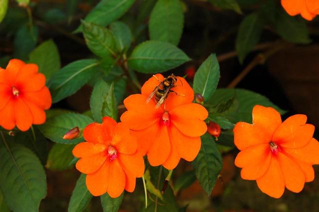 Nepalese Food Orange Cpunty Ca