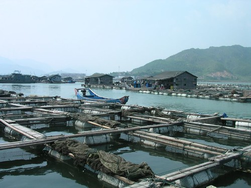 Aquaculture pens in Bay of Luoyuan, China