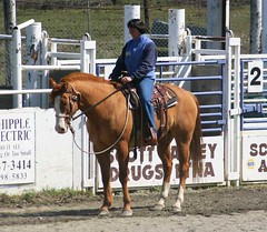 rodeo(0.0), western riding(0.0), eventing(0.0), dressage(0.0), trail riding(0.0), western pleasure(0.0), endurance riding(0.0), barrel racing(0.0), animal sports(1.0), equestrianism(1.0), english riding(1.0), mare(1.0), stallion(1.0), hunt seat(1.0), equestrian sport(1.0), rein(1.0), sports(1.0), animal training(1.0), pack animal(1.0), equitation(1.0), horse(1.0), horse harness(1.0), traditional sport(1.0),