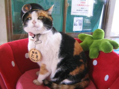 Station-Master Tama