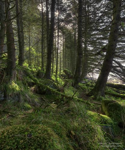 trees geotagged island islands bravo northbeach graham hdr provincialpark queencharlotte towhill haidagwaii ecologicalreserve janusz leszczynski naikoon insearchofhaidaspirit geo:lat=54076996 geo:lon=131796215 003357