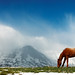 Alpine Equine by www.toddklassy.com