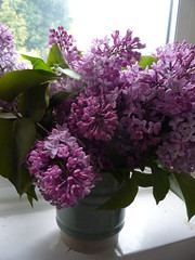 lilac(1.0), shrub(1.0), flower arranging(1.0), cut flowers(1.0), flower(1.0), purple(1.0), floral design(1.0), plant(1.0), lilac(1.0), lavender(1.0), flower bouquet(1.0), floristry(1.0), hyacinth(1.0), pink(1.0),