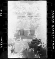 Dad's Greenhouse - infrared film