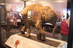 carving(0.0), mammoth(0.0), dinosaur(0.0), tourist attraction(1.0), art(1.0), exhibition(1.0), museum(1.0), sculpture(1.0),