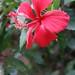 las bellas flores