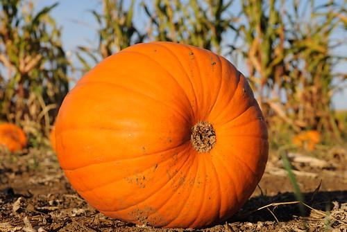 20101031 Pumpkin Patch