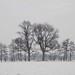 Bäume im Winter..