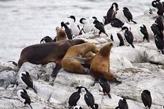 penguin(0.0), animal(1.0), seals(1.0), sea lion(1.0), flightless bird(1.0), fauna(1.0), bird(1.0), wildlife(1.0),