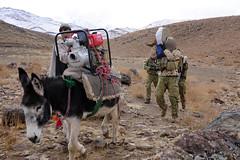 donkey(1.0), mule(1.0), pack animal(1.0), landscape(1.0),