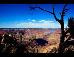 Dead Tree Canyon