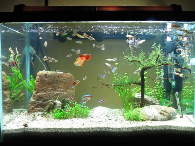 20 gallon aquarium just finished setting up this tank for 20 gallon fish tank size