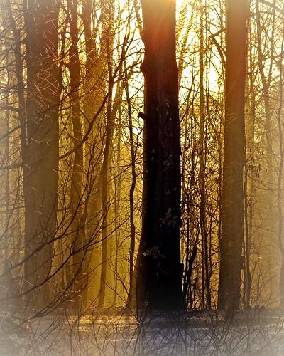 ohio sunrise cleveland kirtland holdenarboretum anewday lanterncourt beautifulgoldenlight