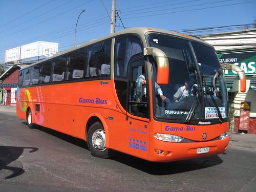 Gama Bus | Novedad.-