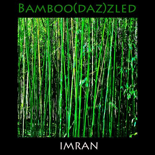 trees green nature square outdoors suffolk nikon framed longisland imran 2010 bamboos s6 patchogue imrananwar eastpatchogue