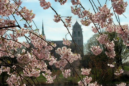 Cherry Blossoms and Cathedral