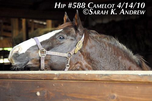 Hip # 588