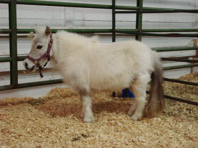 fluffy horses - photo #23