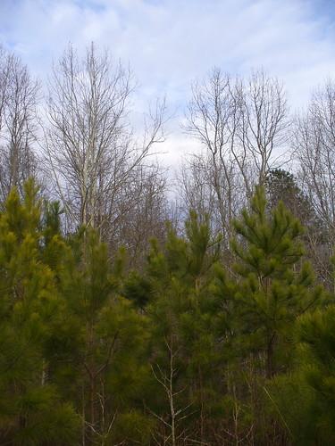 Alabama hardwoods