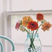 ranunculus by Sarah Jane- Lovely Ember Photography
