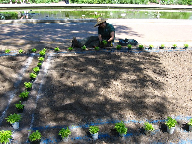 Planting begins on the Annual Border.