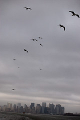 animal migration(1.0), animal(1.0), wing(1.0), flock(1.0), bird migration(1.0), sky(1.0), bird(1.0), flight(1.0),