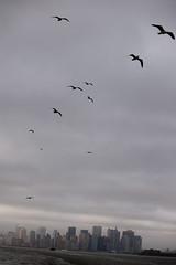 animal migration, animal, wing, flock, bird migration, sky, bird, flight,