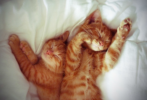 sleepykittensies