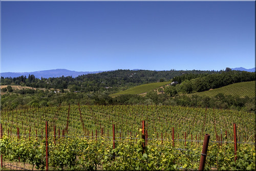 county ca wood blue sky river vineyard vines day wine barrels sonoma winery clear valley grapes 100views russian banding 1751