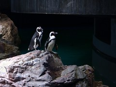 Penguin Friends