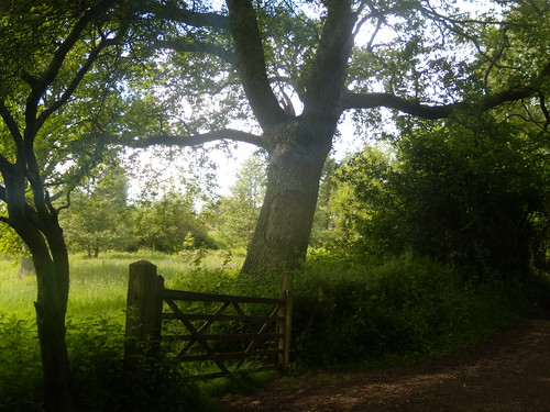 Gate and tree