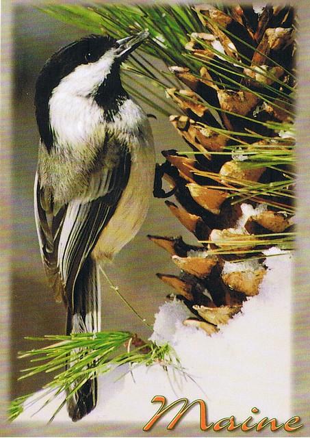 Maines State Flower Maine chickadee...