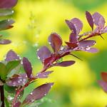 Summer colors - av evisdotter