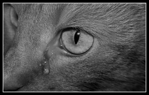 crying cat