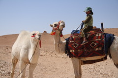 Young Camel Driver