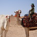 Small photo of Young Camel Driver