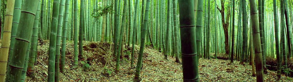 Arashiyama by andhong09