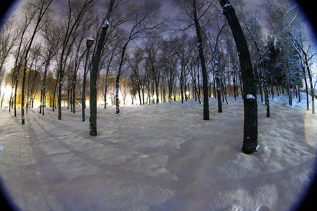 Snowed forest entrevias madrid flickr photo sharing - Madrid forest ...